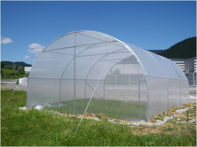ULMA Agrícola's HIGH TUNNEL Greenhouse